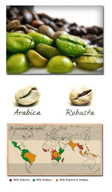 especies y variedades